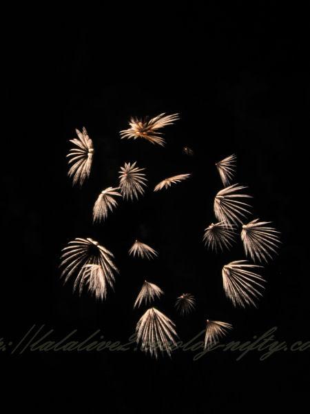 Fireworks201208116