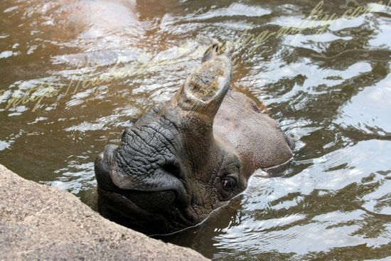 Rhino20120724