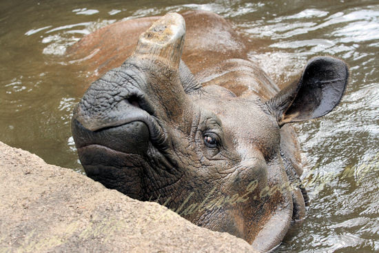 Rhino201207241_2