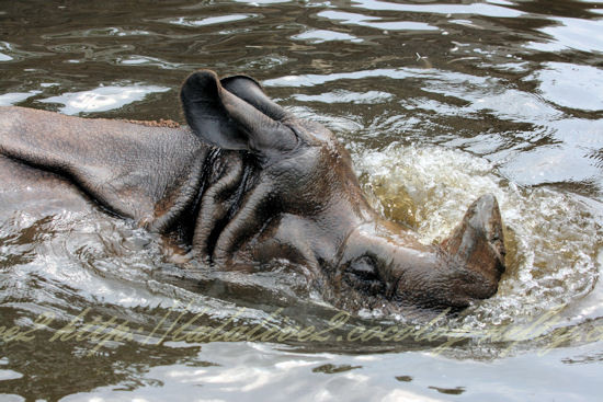 Rhino201207242