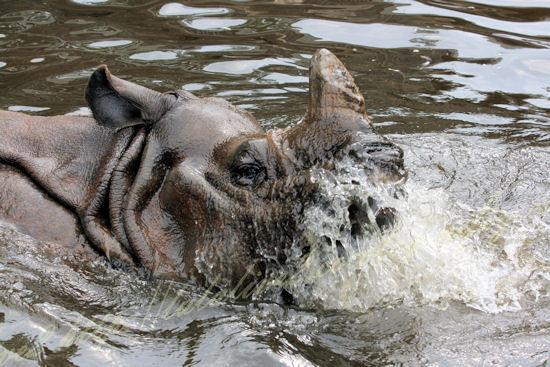 Rhino201207243_2