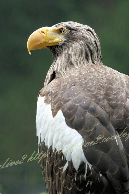 Eagle201205251