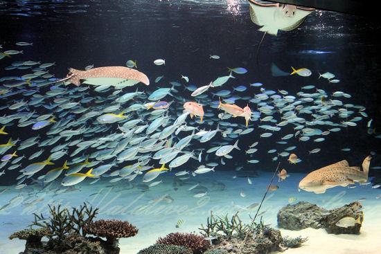 Sunshine_lagoon201209075