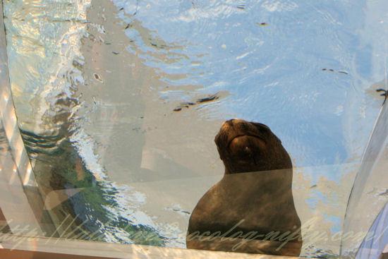 Aquaring201209071