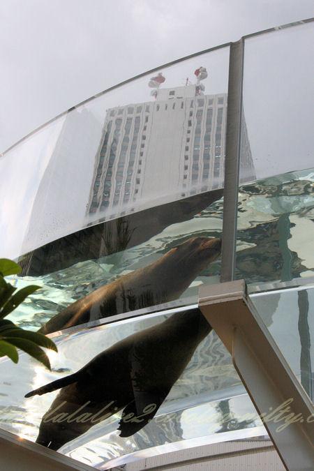 Aquaring201209074