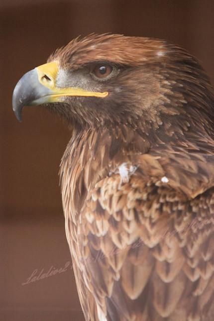 Eagle201209241