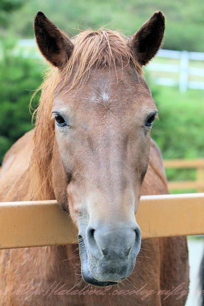 Horse201209241