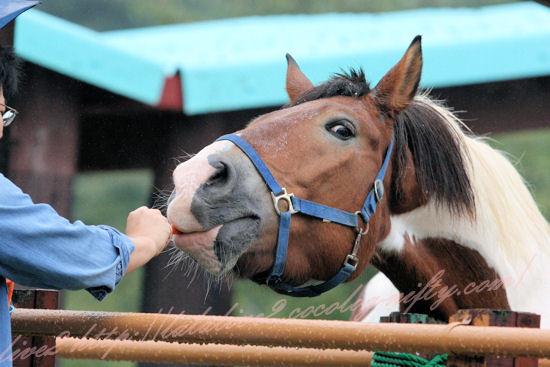 Horse201209242