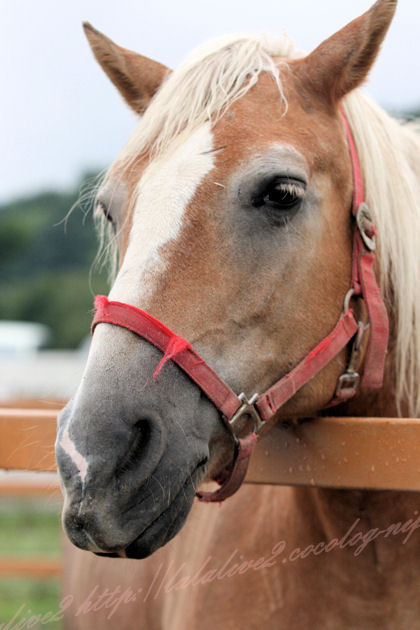 Horse201209243
