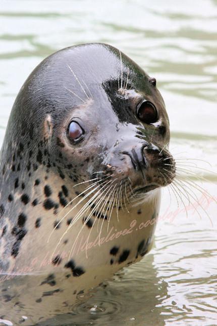Seal20120924