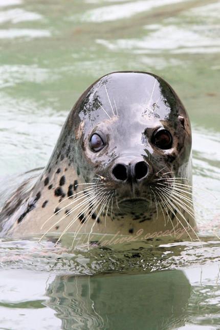 Seal201209241_2