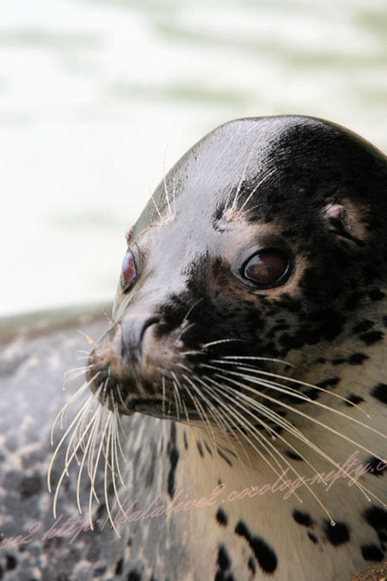 Seal201209242