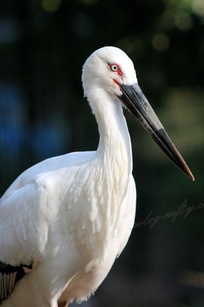 Stork20121025