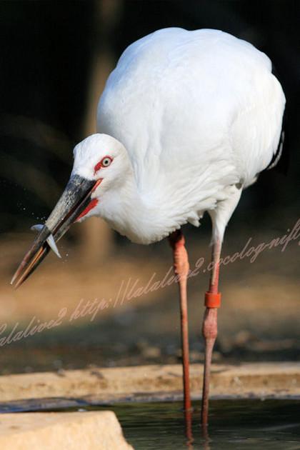 Stork201210251