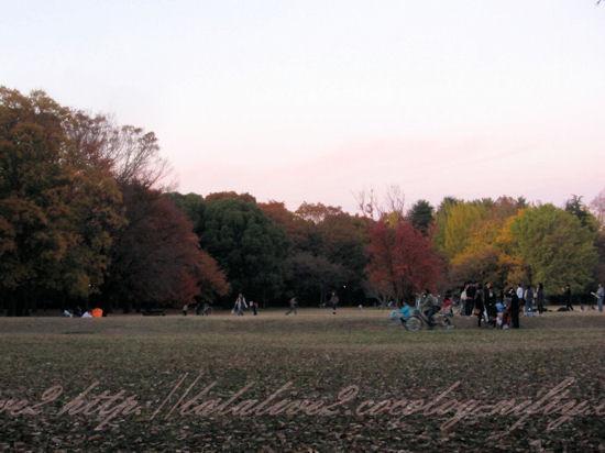 Park201211252