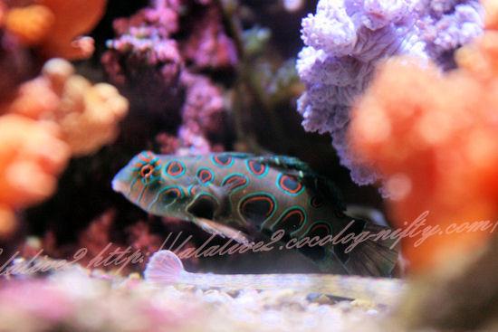 Spotmandarin201209071