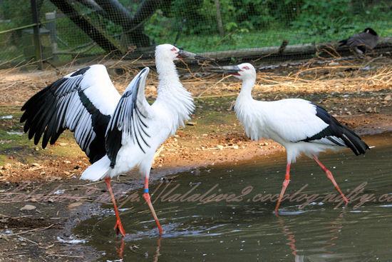 Storks201210251