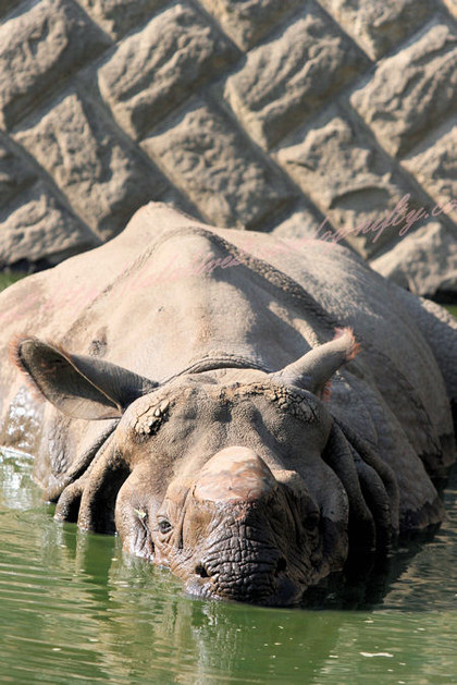 Rhino20121025