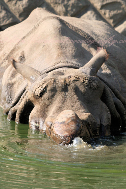 Rhino201210251