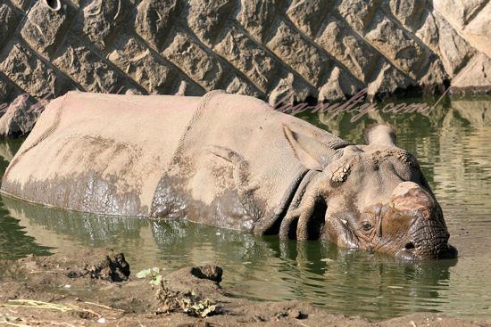 Rhino201210252