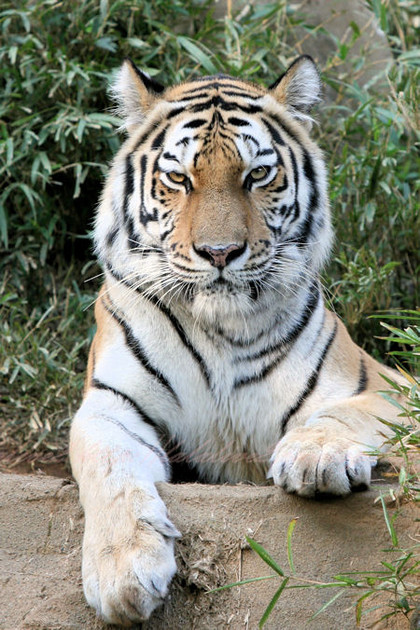 Tiger201210252