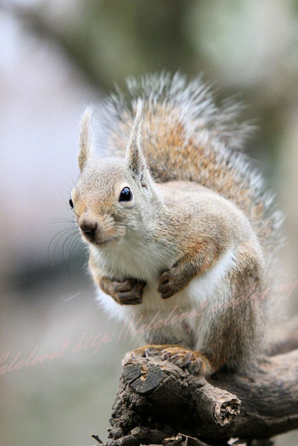 Squirrel20121221