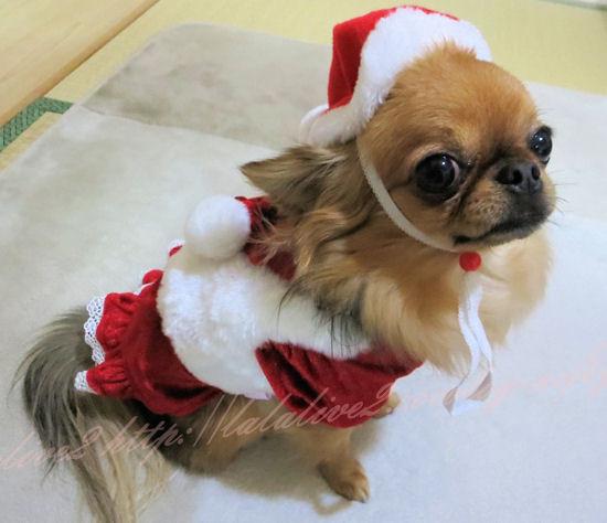 Christmas201212