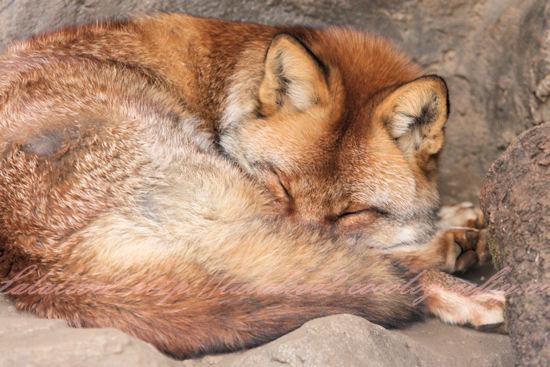 Fox201212212
