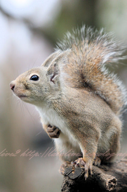 Squirrel201212211