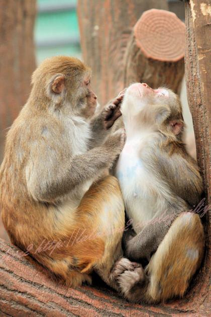 Monkeys20121221
