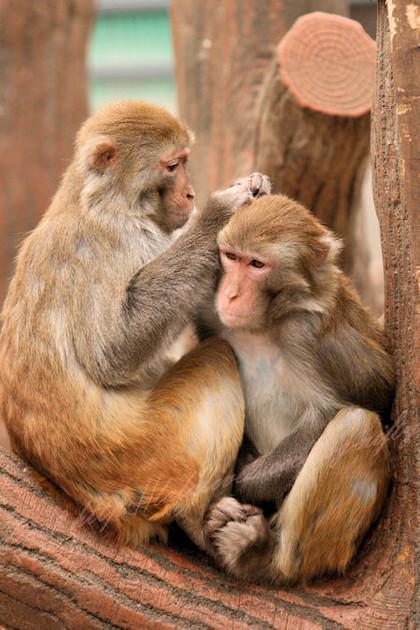 Monkeys201212212