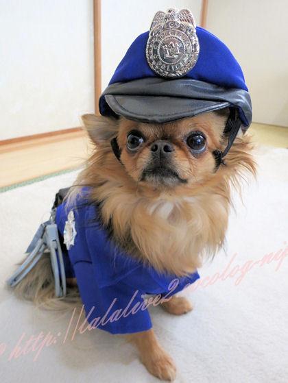 Policemaru1