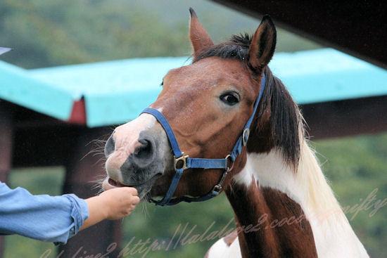 Horse201209244