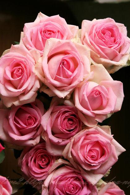 Roseblog5