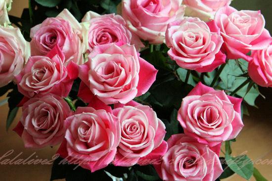 Roseblog7