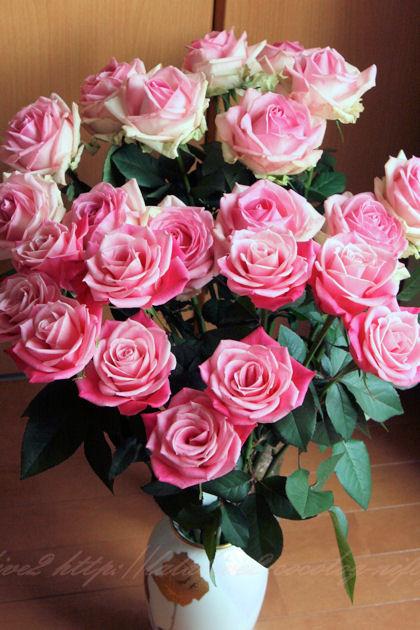 Roseblog8_2