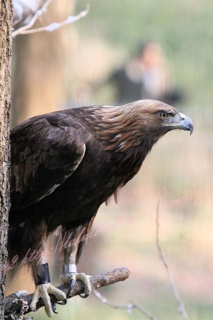 Eagle20130307