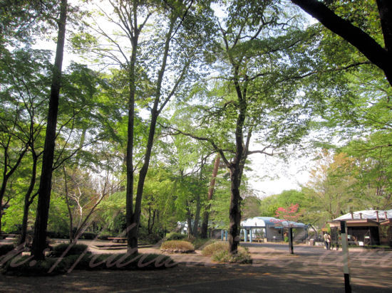 Inogashira20130412