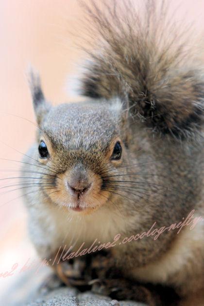 Squirrel20130411