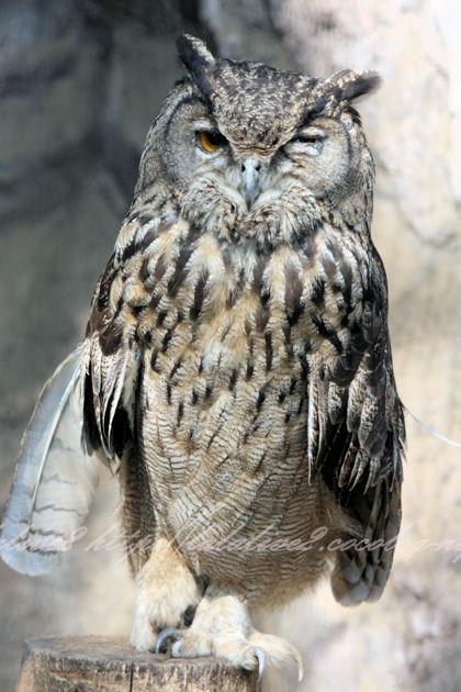 Owl20130412_2