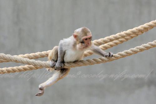 Monkey20130411
