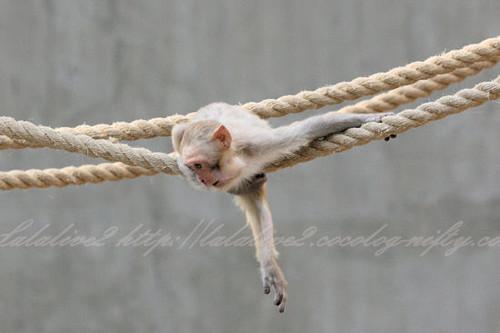 Monkey201304111