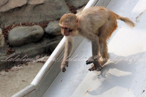 Monkey2013041110