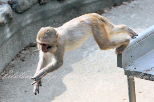 Monkey2013041111