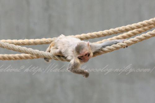 Monkey201304112