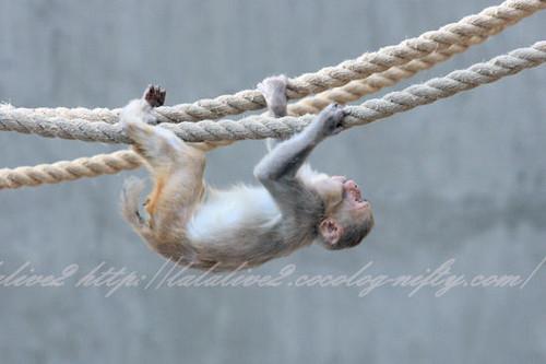 Monkey201304113
