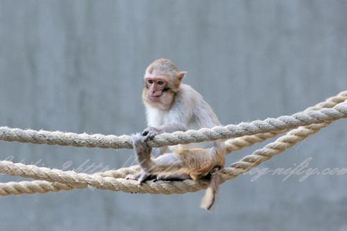 Monkey201304114