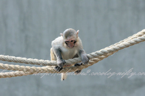 Monkey201304117_2