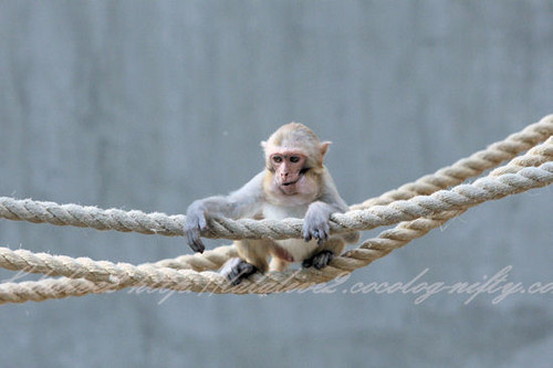 Monkey201304118