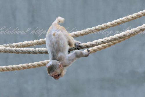 Monkey201304119